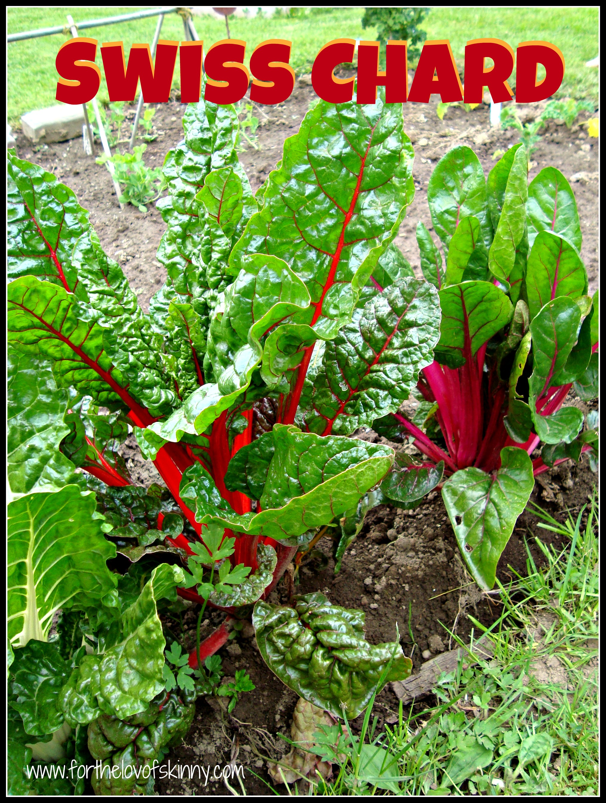 Swiss Chard Year 2 | The Family Chapters